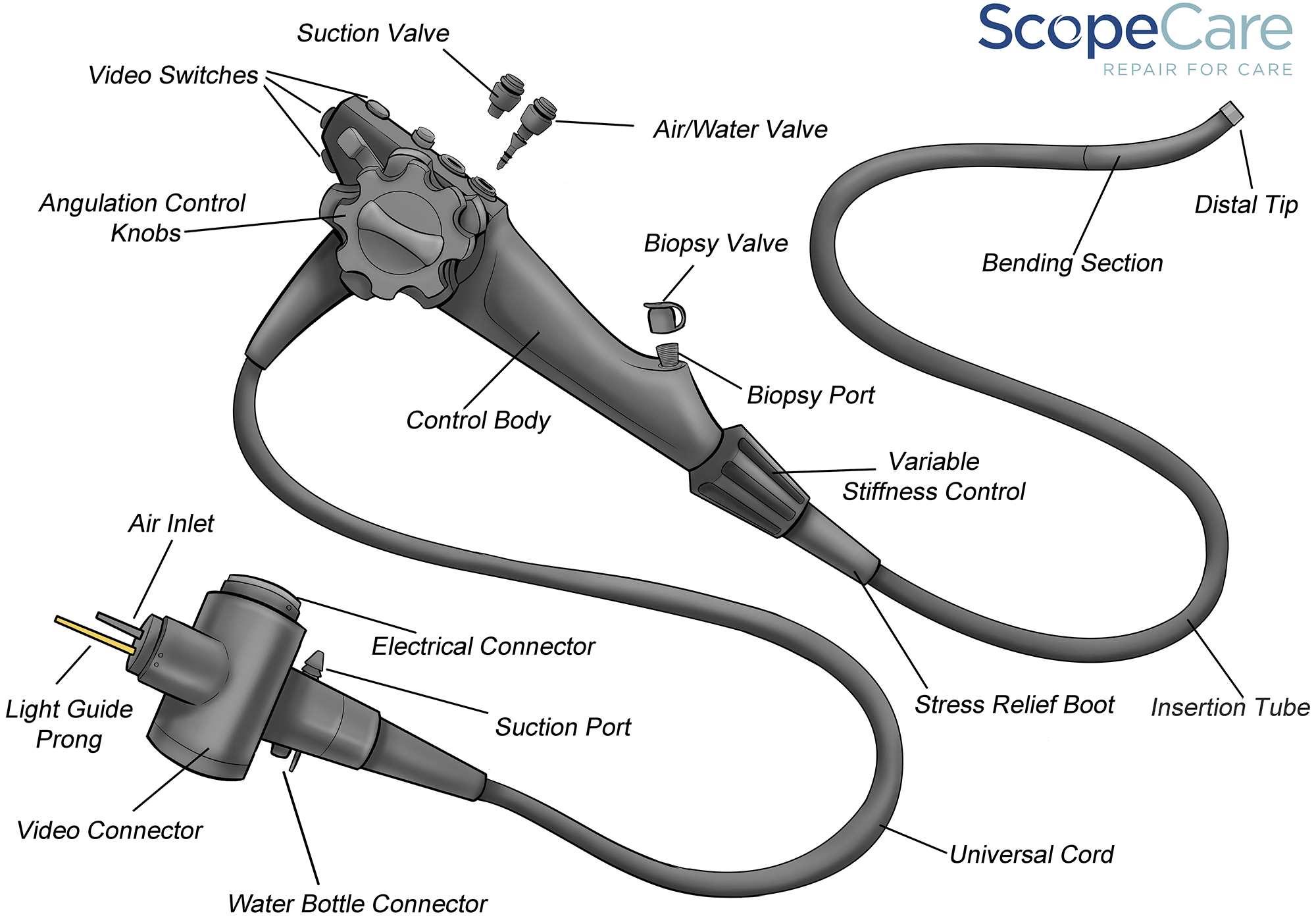 Flex Endoscope